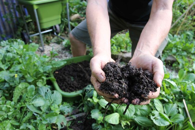 Hungry Bin Worm Farm - High-quality compost is one of the most important ingredients of a healthy garden.